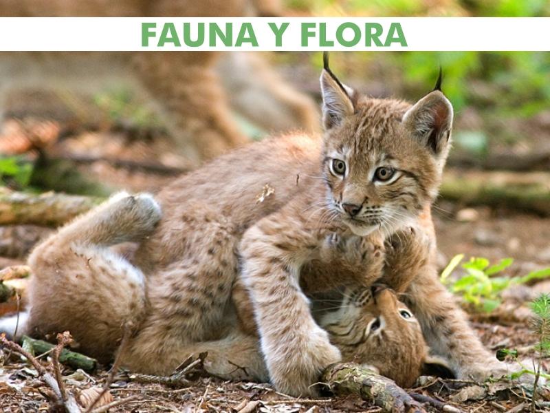 Banner Fauna y Flora